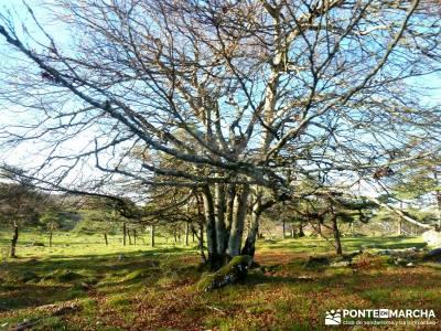 Parques Naturales Urbasa-Andía y Aralar - Nacedero del Urederra; viaje noviembre